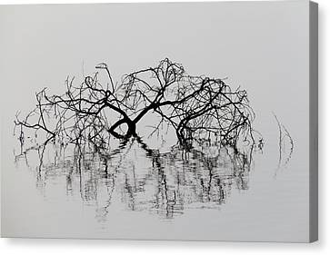 Broken Tree Branch And Reflection Abstraction Canvas Print