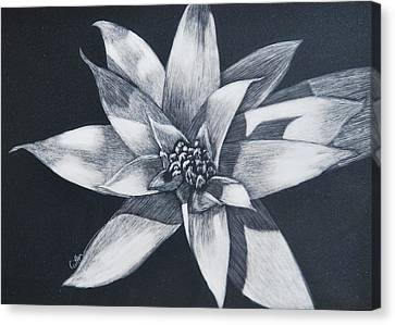 Bromeliad Canvas Print by Diane Cutter