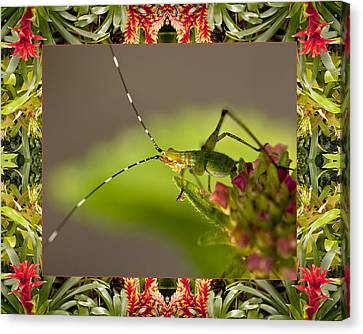 Canvas Print featuring the photograph Bromeliad Grasshopper by Bell And Todd