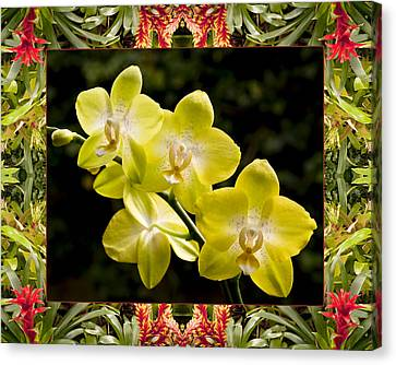 Bromeliad Orchids Canvas Print