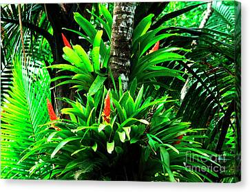 Bromeliads El Yunque National Forest Canvas Print by Thomas R Fletcher