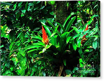 Bromeliads El Yunque  Canvas Print by Thomas R Fletcher