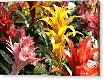 Bromeliads Canvas Print by Steven Sparks