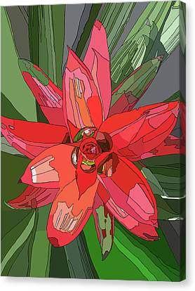 Bromiliad Canvas Print by Jamie Downs