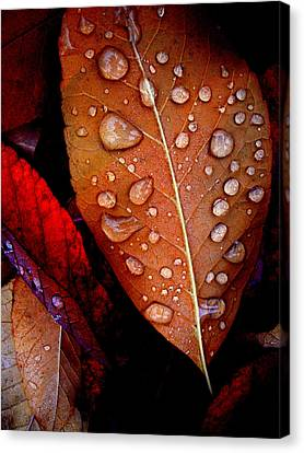 Bronzed Leaf Canvas Print by The Forests Edge Photography - Diane Sandoval