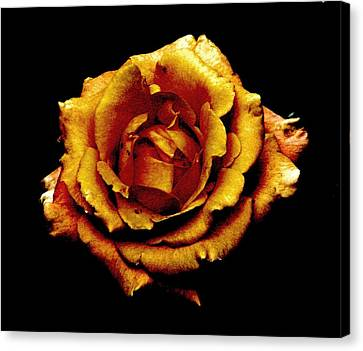 Bronzed Rose Canvas Print by Angela Davies