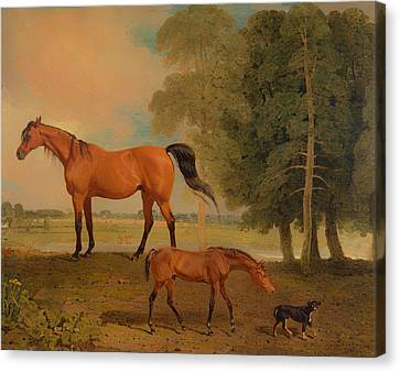 Broodmare With Foal And A Terrier Canvas Print by Mountain Dreams