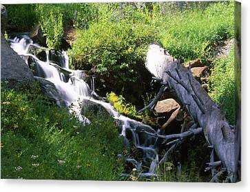 Brook And Deadfall Canvas Print by Soli Deo Gloria Wilderness And Wildlife Photography