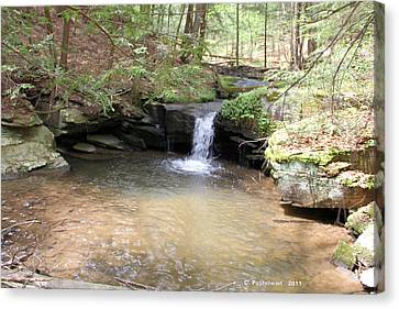 Brook Trout Falls Canvas Print