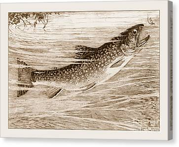 Canvas Print featuring the photograph Brook Trout Going After A Fly by John Stephens
