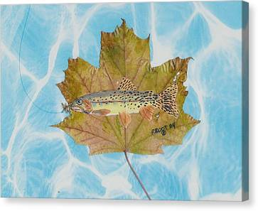 Brook Trout On Fly Canvas Print
