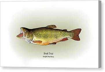 Brook Trout Canvas Print by Ralph Martens