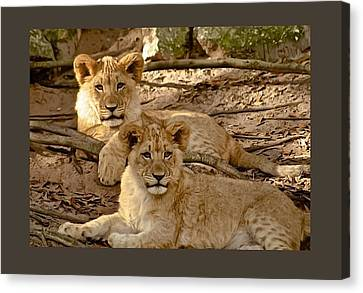 Zoo Canvas Print - Brothers by Janal Koenig