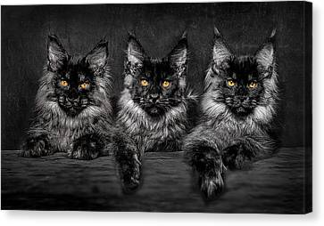 Canvas Print featuring the photograph Brothers by Robert Sijka