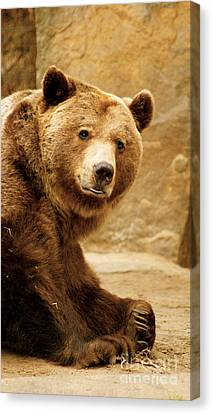 Canvas Print featuring the photograph Brown Bear by Louise Fahy