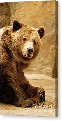 Brown Bear Canvas Print by Louise Fahy