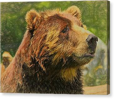 Animal Canvas Print - Brown Bear Portrait by Dan Sproul