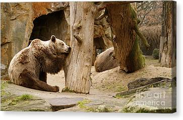 Canvas Print featuring the photograph Brown Bears by Louise Fahy