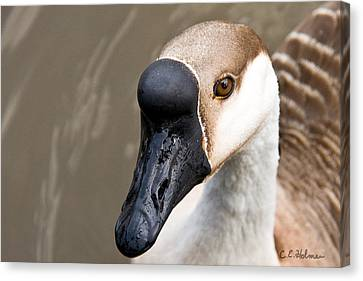 Brown Eye Canvas Print by Christopher Holmes