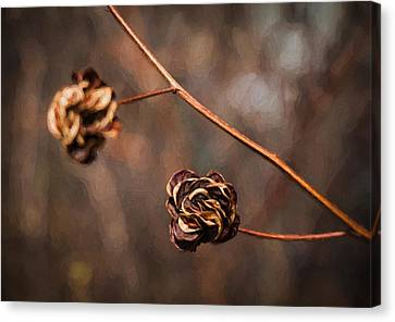 Brown Flower Seed Canvas Print