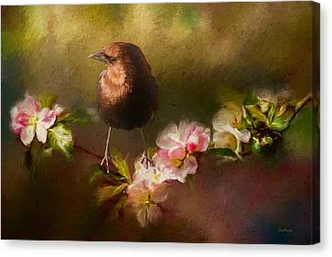 Brown-headed Cowbird - Painting Canvas Print