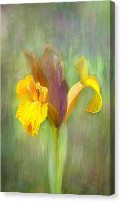 Brown Iris Canvas Print by Angela A Stanton