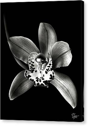 Brown Orchid In Black And White Canvas Print by Endre Balogh