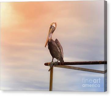 Brown Pelican Sunset Canvas Print by Robert Frederick