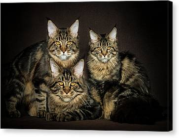 Brown Siblings Canvas Print by Robert Sijka