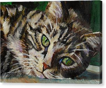 Brown Tabby Cat Canvas Print by Mary Jo Zorad