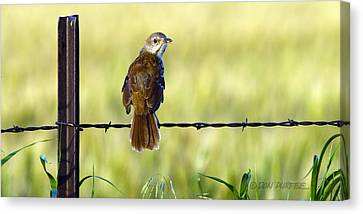 Canvas Print featuring the photograph Brown Thrasher by Don Durfee