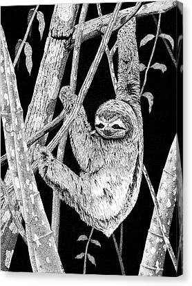 Brown-throated Sloth Canvas Print - Brown-throated Three-toed Sloth by Marcus England