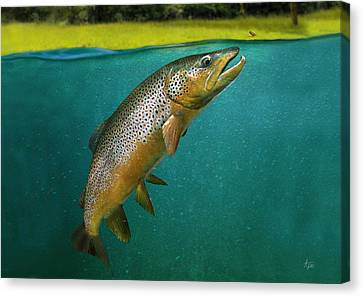 Brown Trout Canvas Print by Anders Ovesen