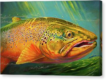 Brown Trout Portrait  Canvas Print
