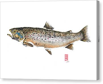 Brown Trout Teuronjoki #bt0002 Canvas Print by Kirby Wilson