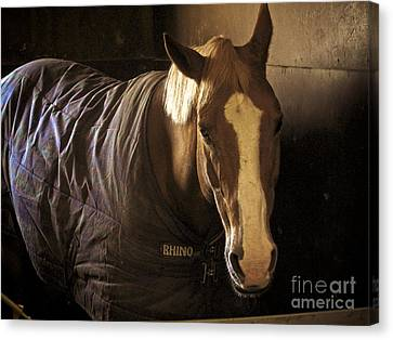 Brownie Canvas Print by Valerie Morrison