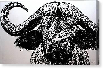 Bruce, The Cape Buffalo Canvas Print
