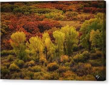 Canvas Print - Brush Strokes by Peter Coskun