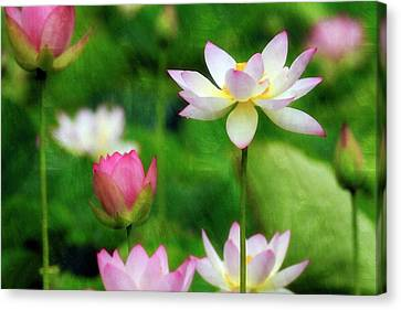 Canvas Print featuring the photograph Brushed Lotus by Edward Kreis