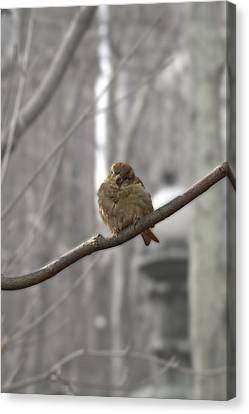 Bryant Park Bird Nyc Canvas Print by Henri Irizarri
