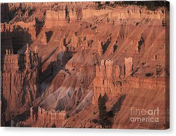 Bryce Canyon At The Golden Hour Canvas Print