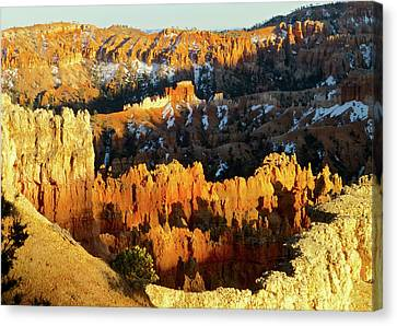 Bryce Canyon Hoodoos Evening Canvas Print by Amelia Racca