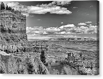 Bryce Canyon In Black And White Canvas Print by Nancy Landry