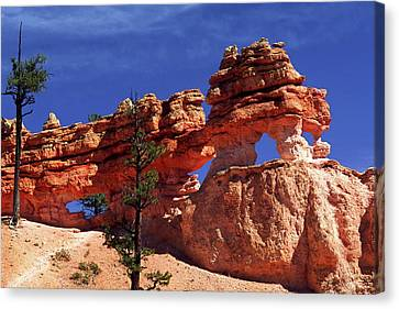 Bryce Canyon National Park Canvas Print by Sally Weigand
