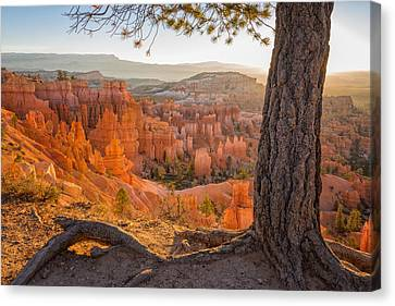 Hoodoos Canvas Print - Bryce Canyon National Park Sunrise 2 - Utah by Brian Harig