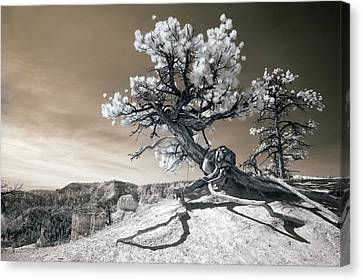 Bryce Canyon Tree Sculpture Canvas Print by Mike Irwin