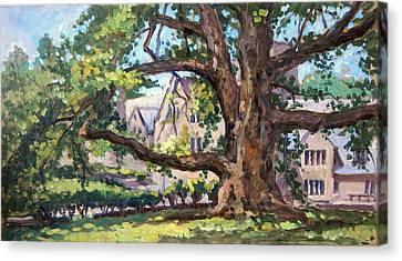 Bryn Mawr Tree Wide Reach Canvas Print by Thor Wickstrom