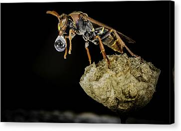 Bubble Blowing Wasp Canvas Print