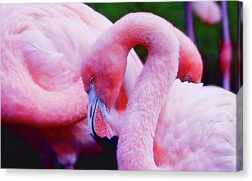 Canvas Print featuring the photograph Bubble Gum Pink by Elaine Manley