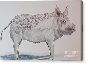 Bubble Pig Canvas Print